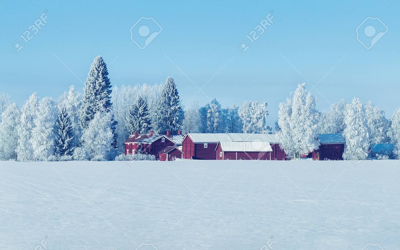 Cottage in winter countryside at Lapland, Finland, in a sunny day - 90933770