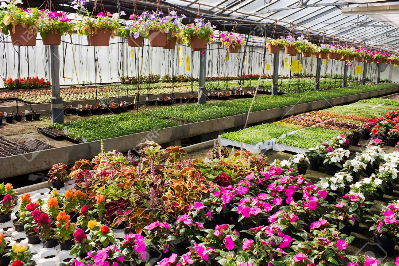 Greenhouse - Nursery Of Flowers And Plants For Garden Stock Photo ...