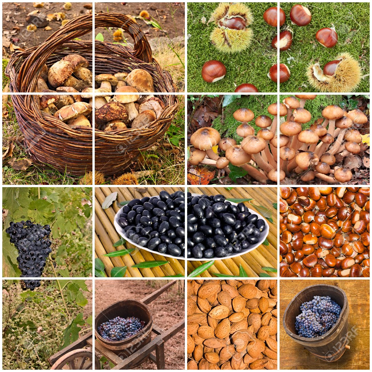 collage of the italian autumnal fruits  mushrooms, grapes, chestnuts, almonds, olives - typical products of the autumn in Tuscany, Italy Stock Photo - 15629599