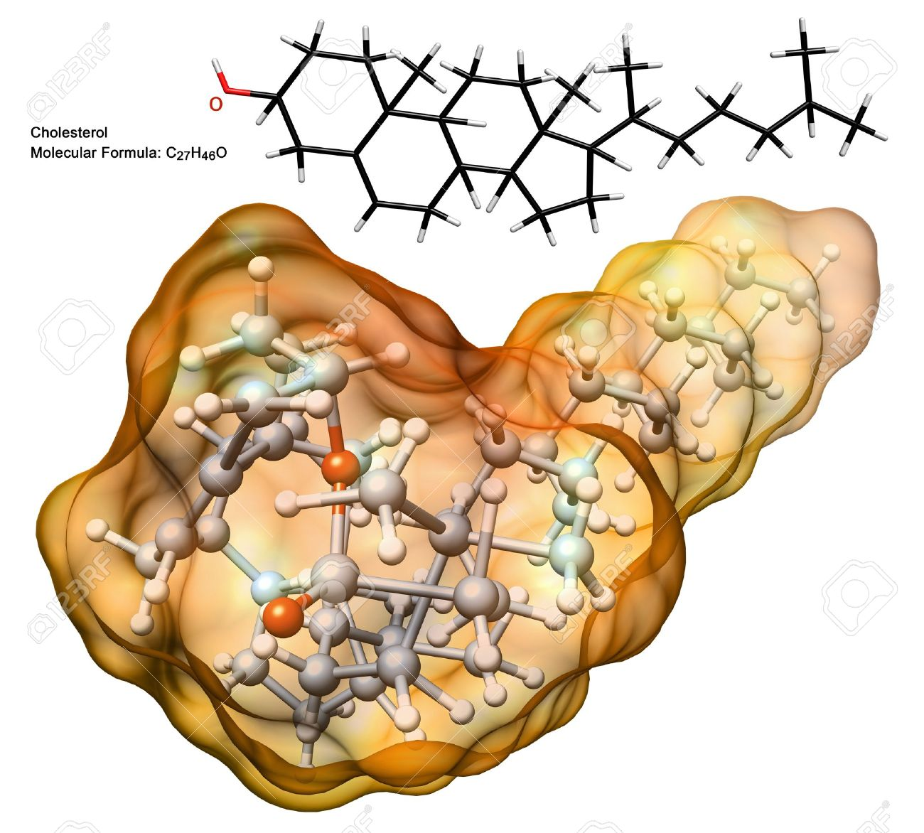 organic chemistry: 3d structure of cholesterol molecule with chemical formula and 2d model - illustration of biological particle isolated Stock Photo - 17631414