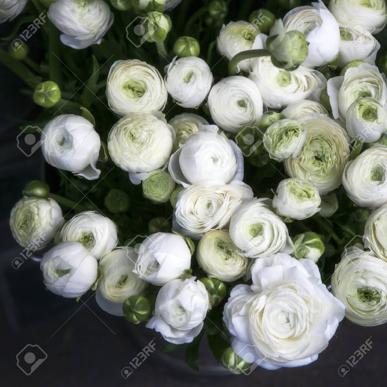 White Ranunculus Flowers In A Glass Vase Soft Focus Stock Photo