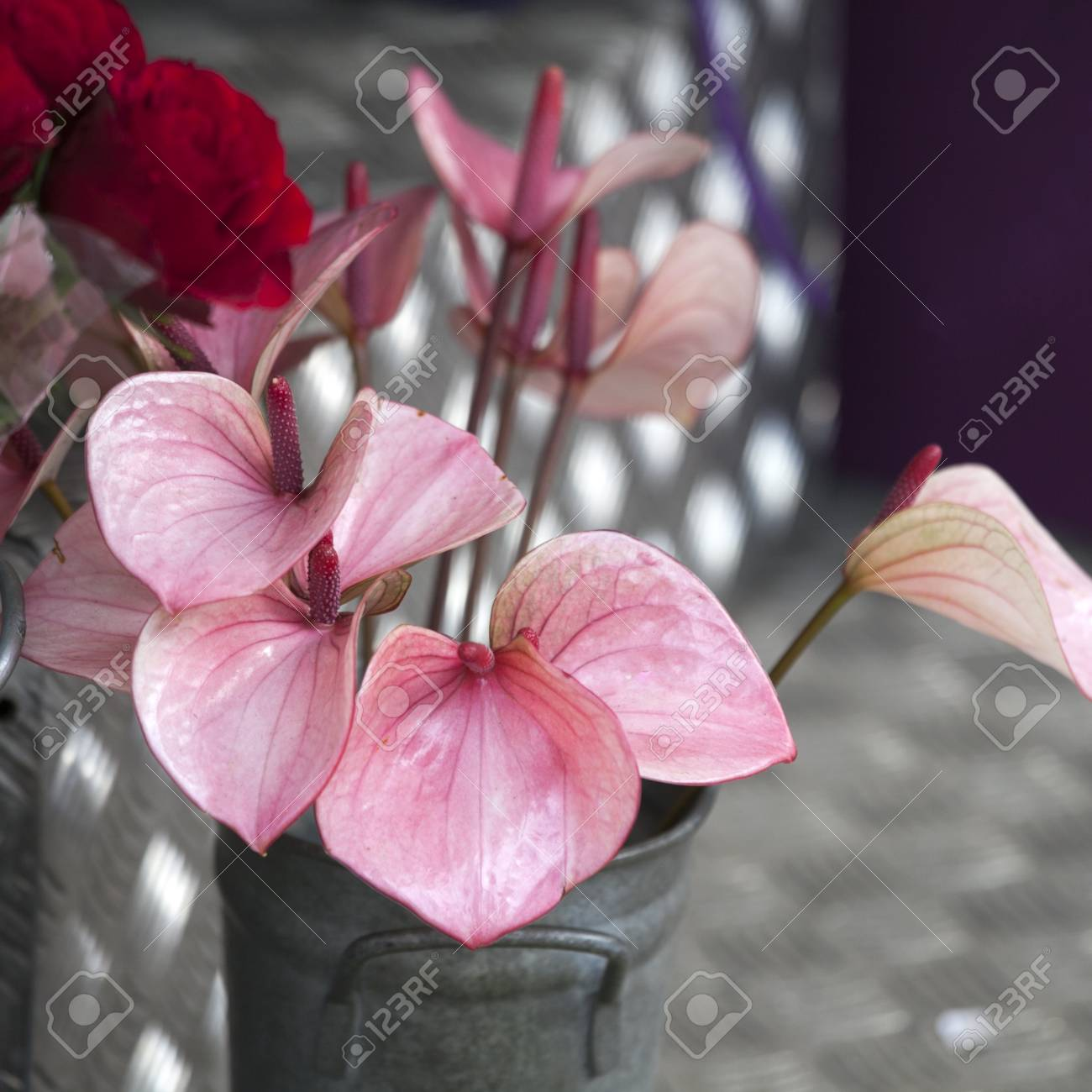 The anthurium or flamingo flower top view stock photo picture and stock photo the anthurium or flamingo flower top view mightylinksfo