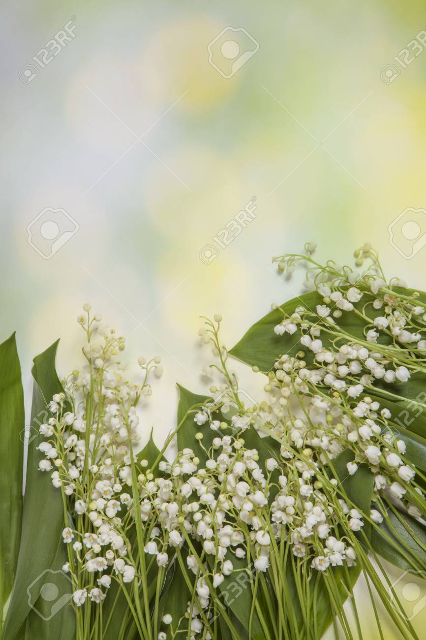 Fresh spring light lilly of the valley flowers and leaves bouquet fresh spring light lilly of the valley flowers and leaves bouquet isolated on on green mightylinksfo