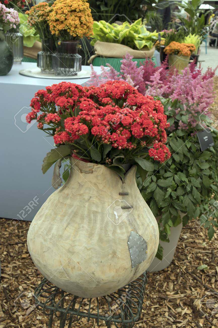 Different types of multi-colored Kalanchoe in clay pots in the greenhouse of the botanical : different types of flower pots - startupinsights.org