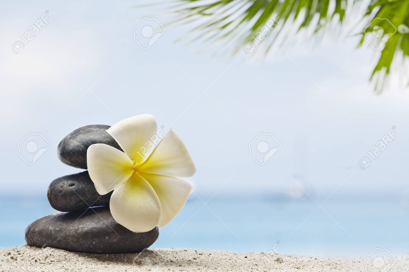 close up view of  gray stones  and flower  on color back Stock Photo - 7144678