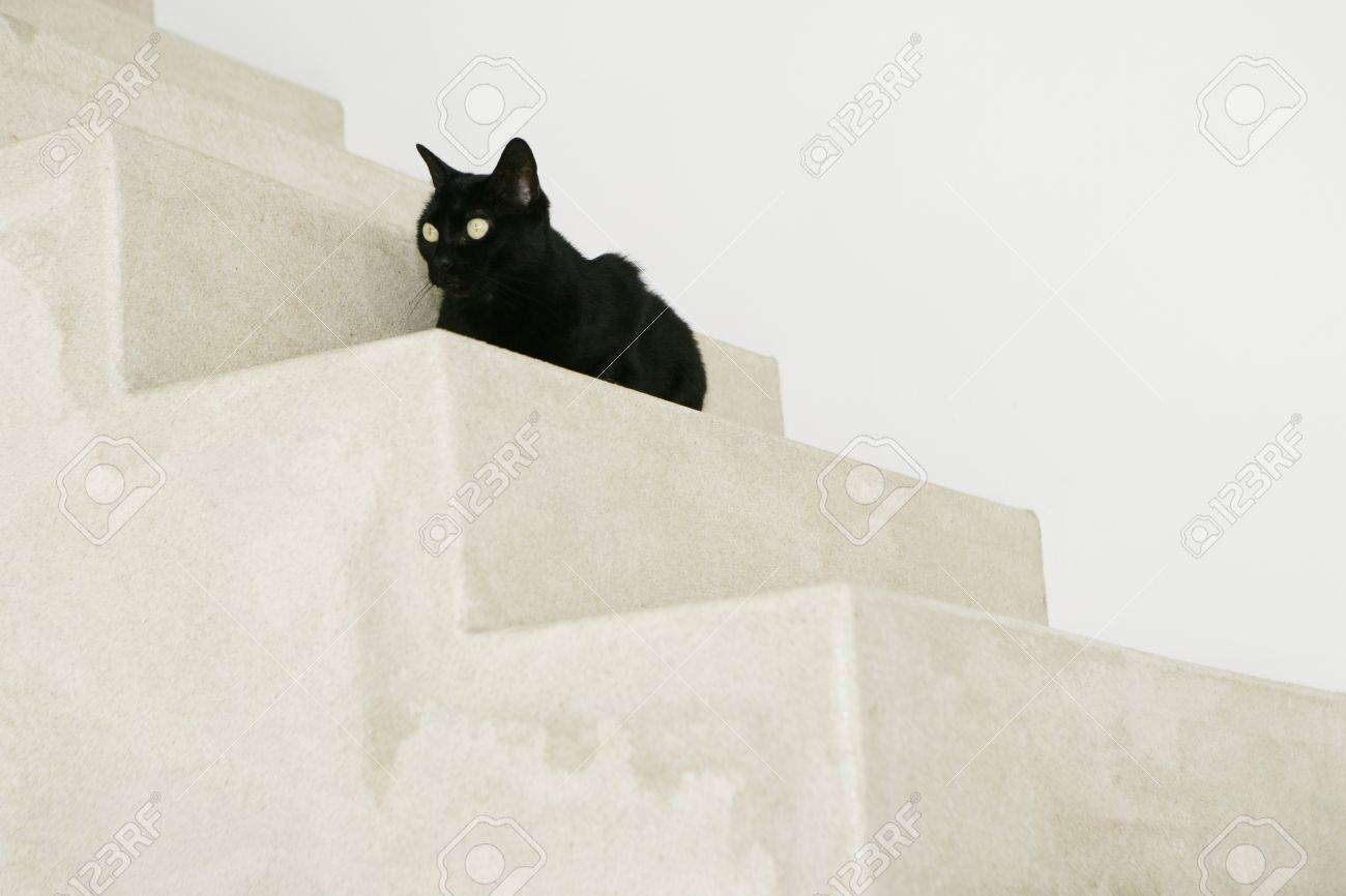 Black cat on stairs - 7597236