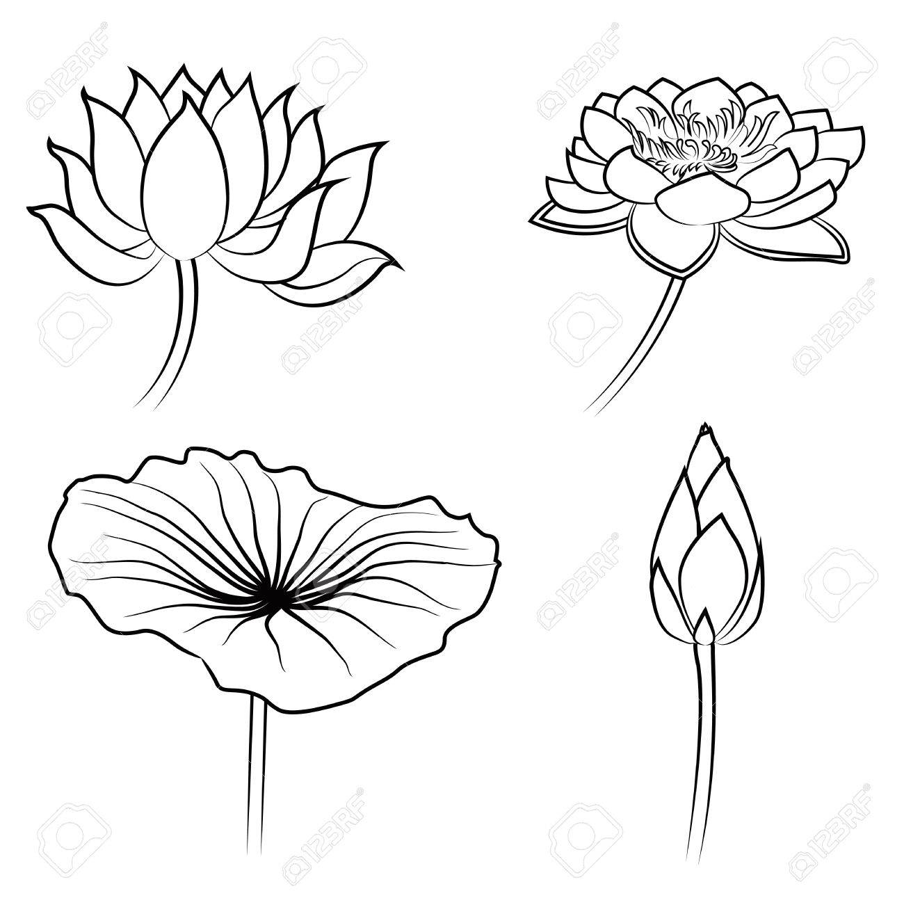 Floral water lily elements for design royalty free cliparts vectors floral water lily elements for design stock vector 29255566 izmirmasajfo