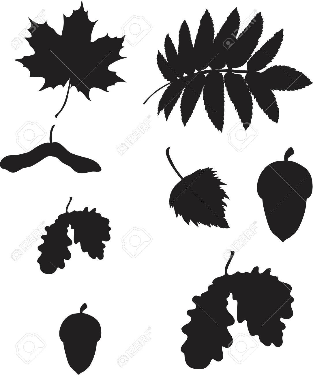 set of different nature elements isolated on with background Stock Vector - 8017387