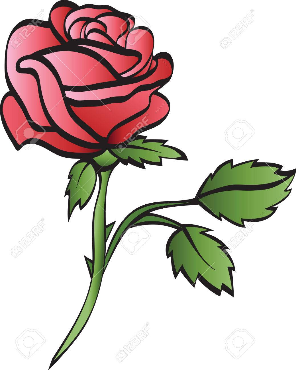 rose isolated on whte background Stock Vector - 8265034