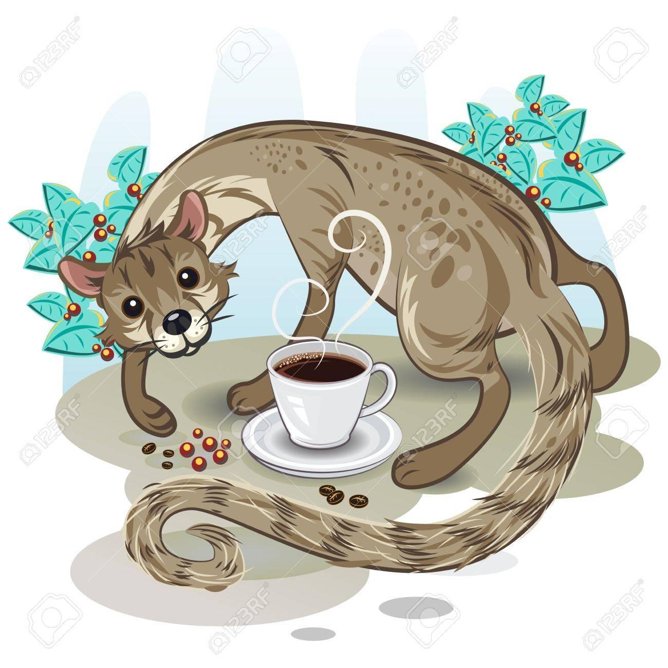 Civet Coffee Kopi Luwak - 20707907
