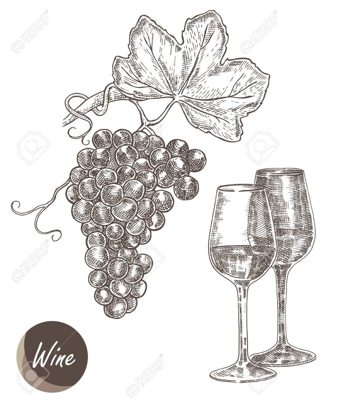 Grappe de raisin et verre à vin. Vector illustration de style de croquis