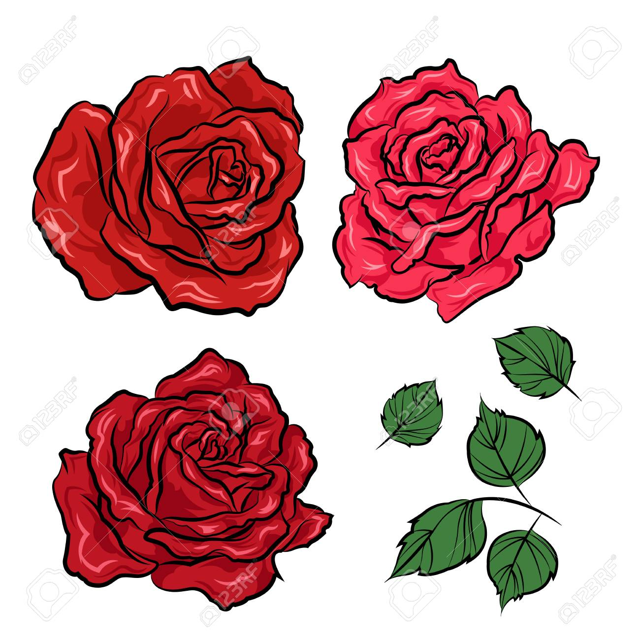 hand drawn roses and leaves isolated on white background vector