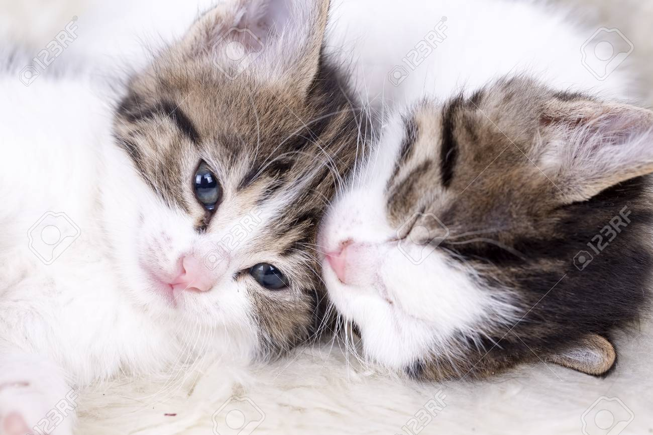 Cute Beautiful Kitten Baby Cat Isolated In The House Stock Photo Picture And Royalty Free Image Image 93527736
