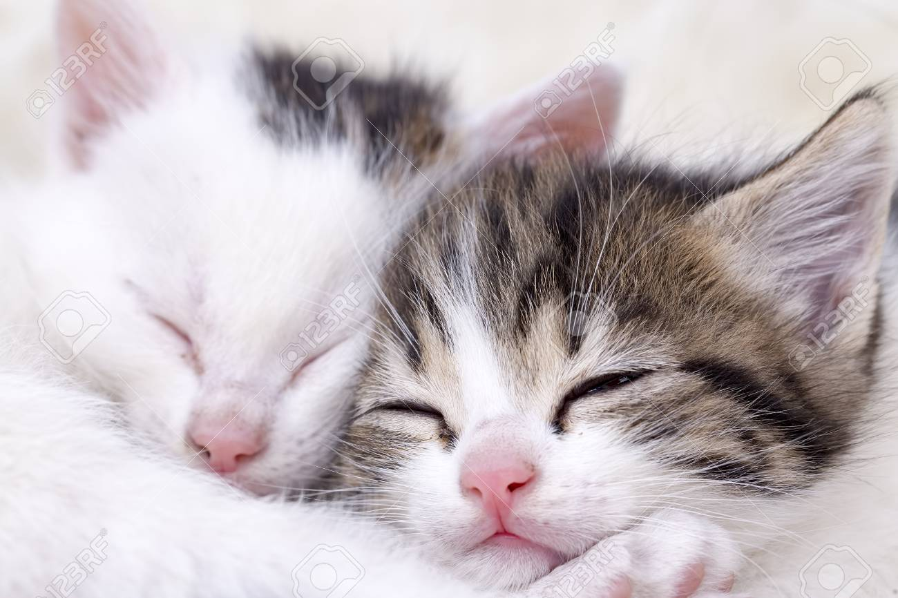 Cute Beautiful Kitten Baby Cat Isolated In The House Stock Photo Picture And Royalty Free Image Image 93546252