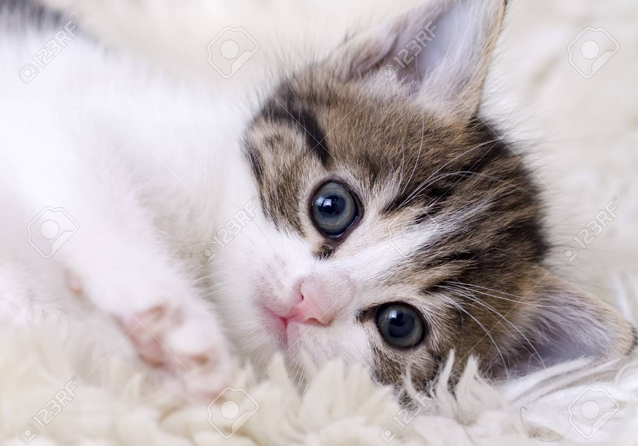 Cute Beautiful Kitten Baby Cat Isolated In The House Stock Photo Picture And Royalty Free Image Image 93480218