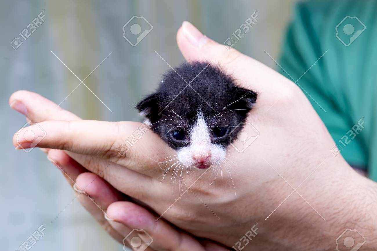 Cute Kitten Baby Cat Stock Photo Picture And Royalty Free Image Image 109223888
