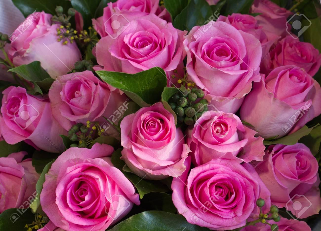 Blush Rosas De Color Rosa Colores Románticos De Amor Fotos
