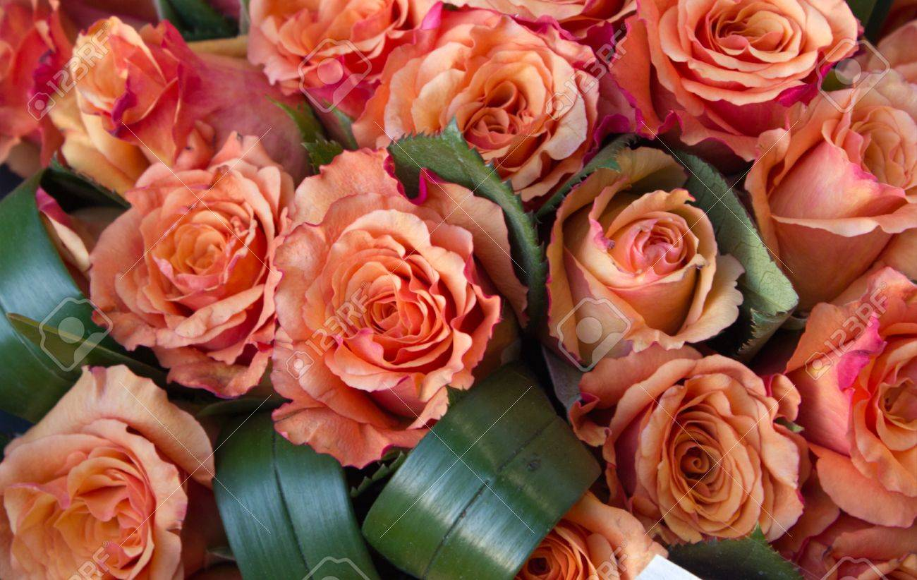 Salmon And Peach Roses, Romantic Colors Of Love Stock Photo, Picture ...