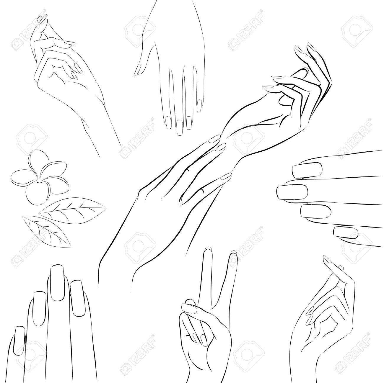 collection of hand drawn elegant womans hands in various gestures