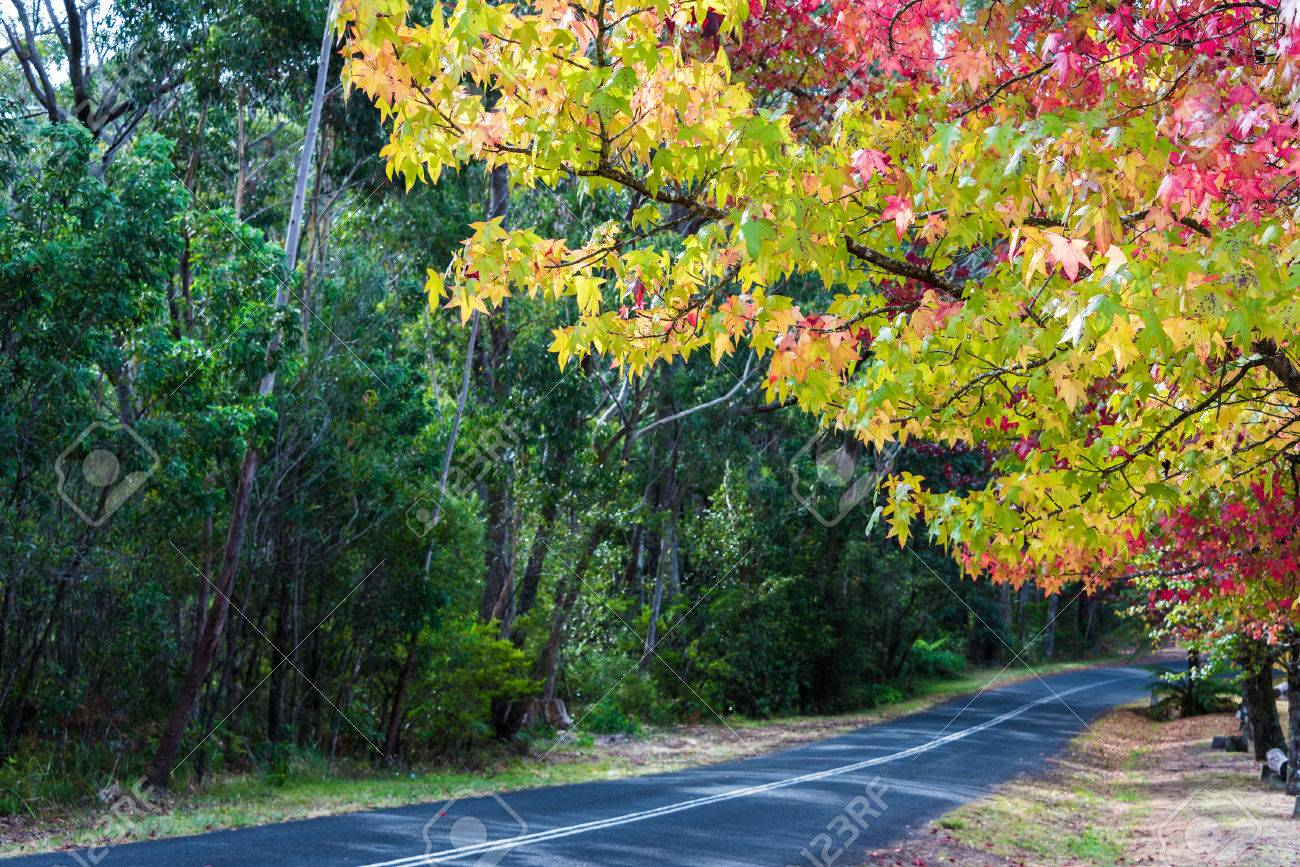 Autumn Countryside Road With Colorful Trees On Sunny Day. Bright ...