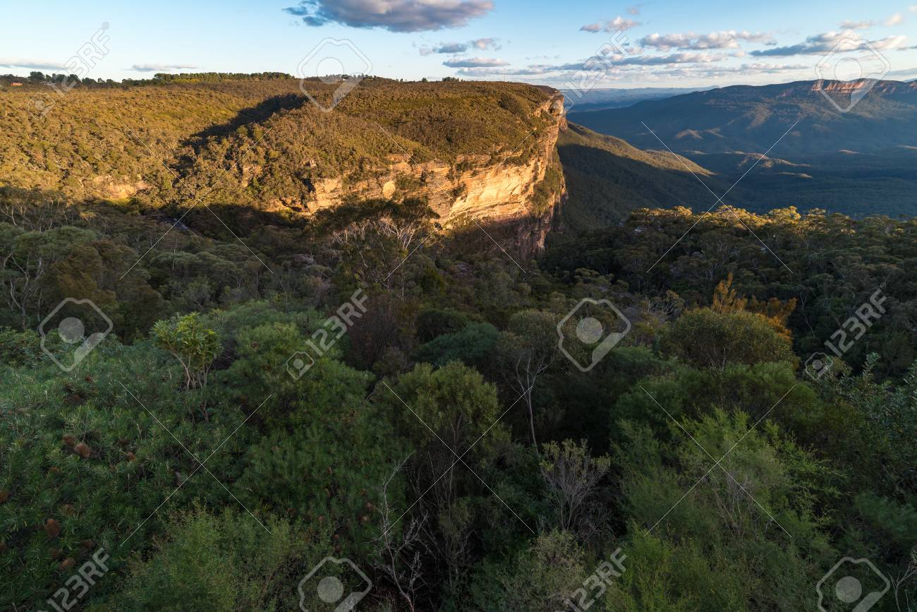 ユーカリの森で青山の風景 ブルー マウンテン国立公園 ニュー