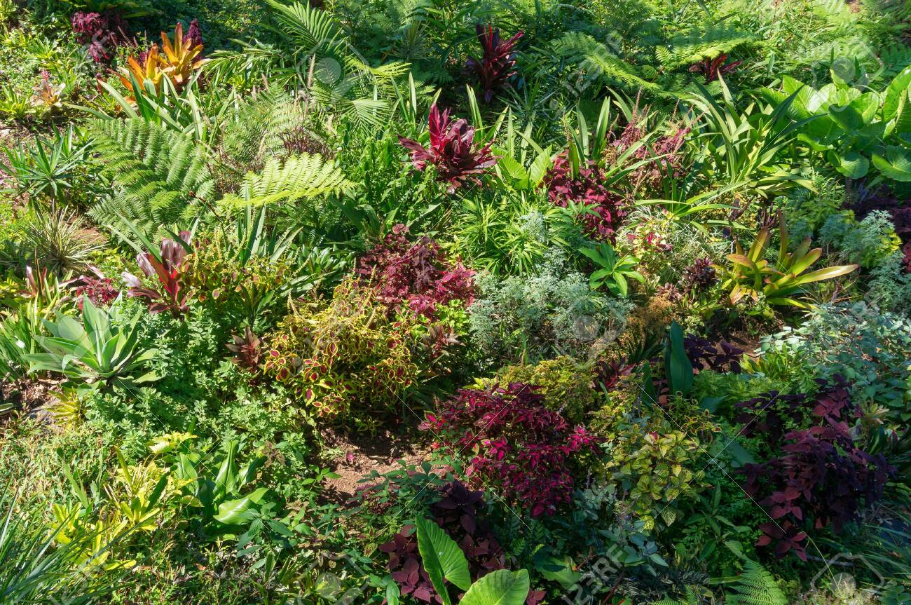 Close Up Of Bright Green And Red Purple Decorative Plants Outdoor