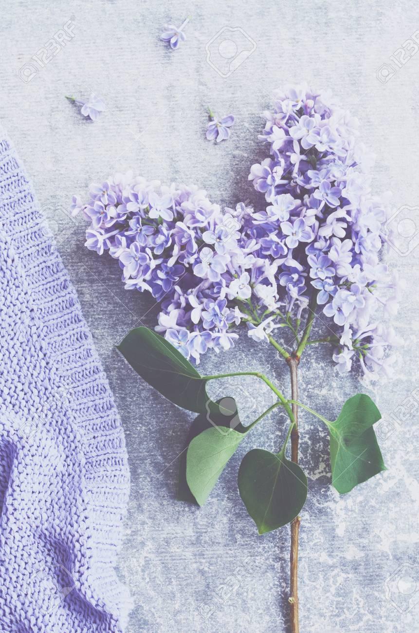 Décoration Mauve Et Gris décoration avec des fleurs de lilas et mauve pull en tricot texture sur  fond de béton gris