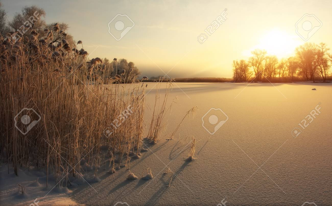 Beautiful winter landscape. The branches of the trees are covered with hoarfrost. Foggy morning sunrise. Colorful evening, bright sunshine over a river or lake. - 115696660