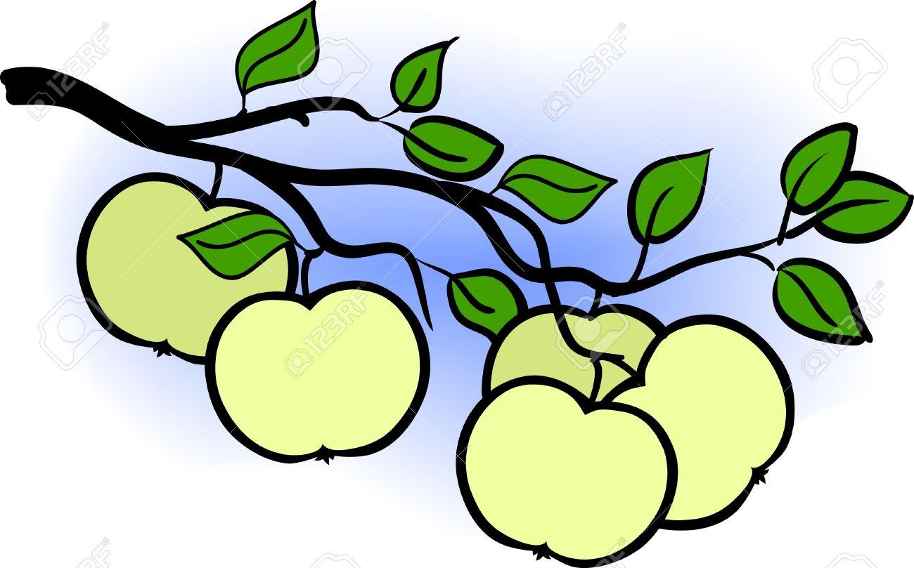 beautiful green apple branch of  tree, vector illustration Stock Vector - 10458505