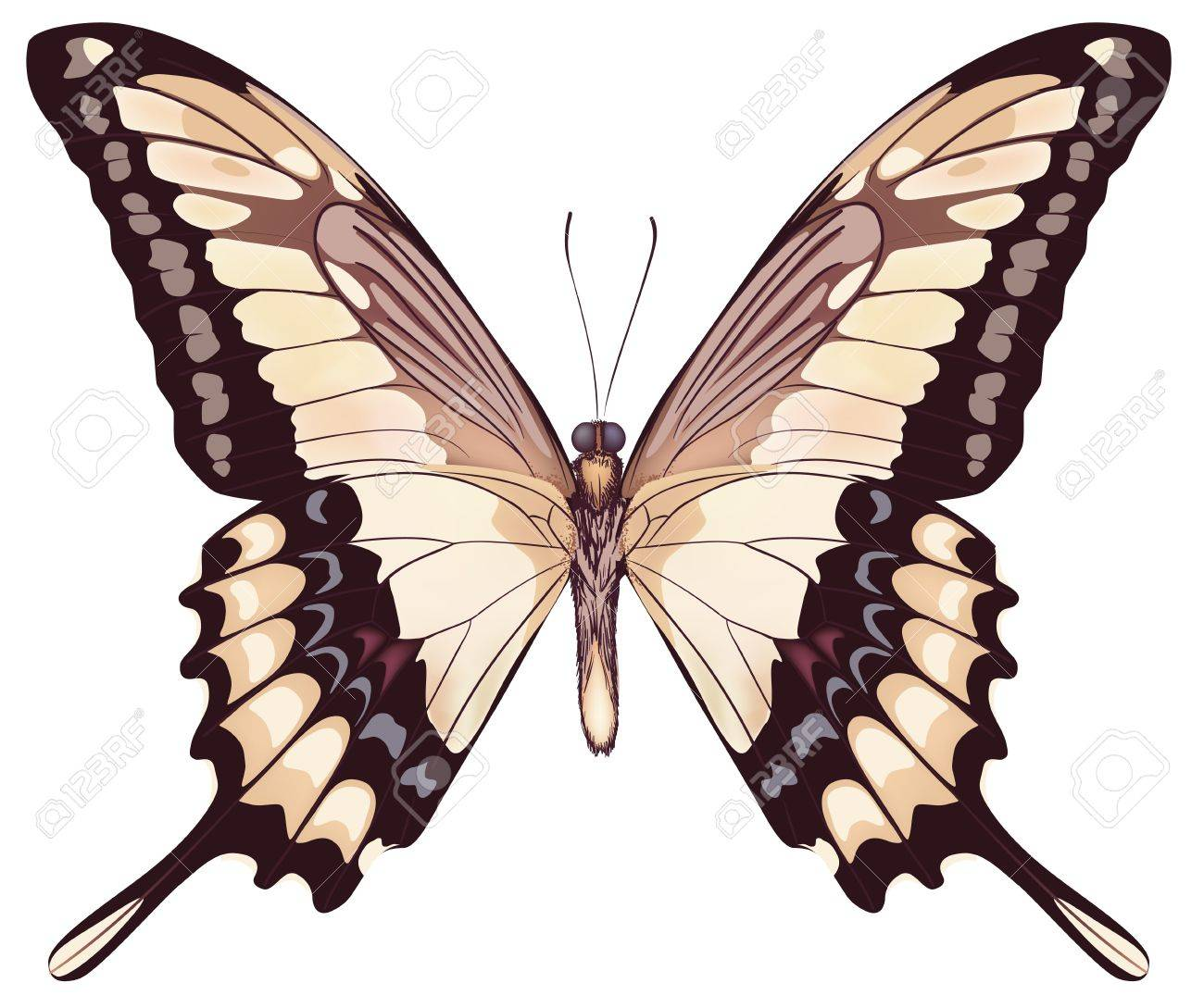 Isolated Light Butterfly Stock Vector - 13820263