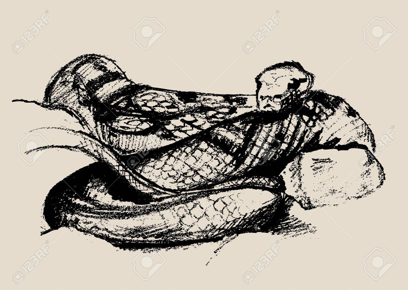 Snake Sketch, Beautiful Terrible Reptile  Illustration Stock Vector - 15397242