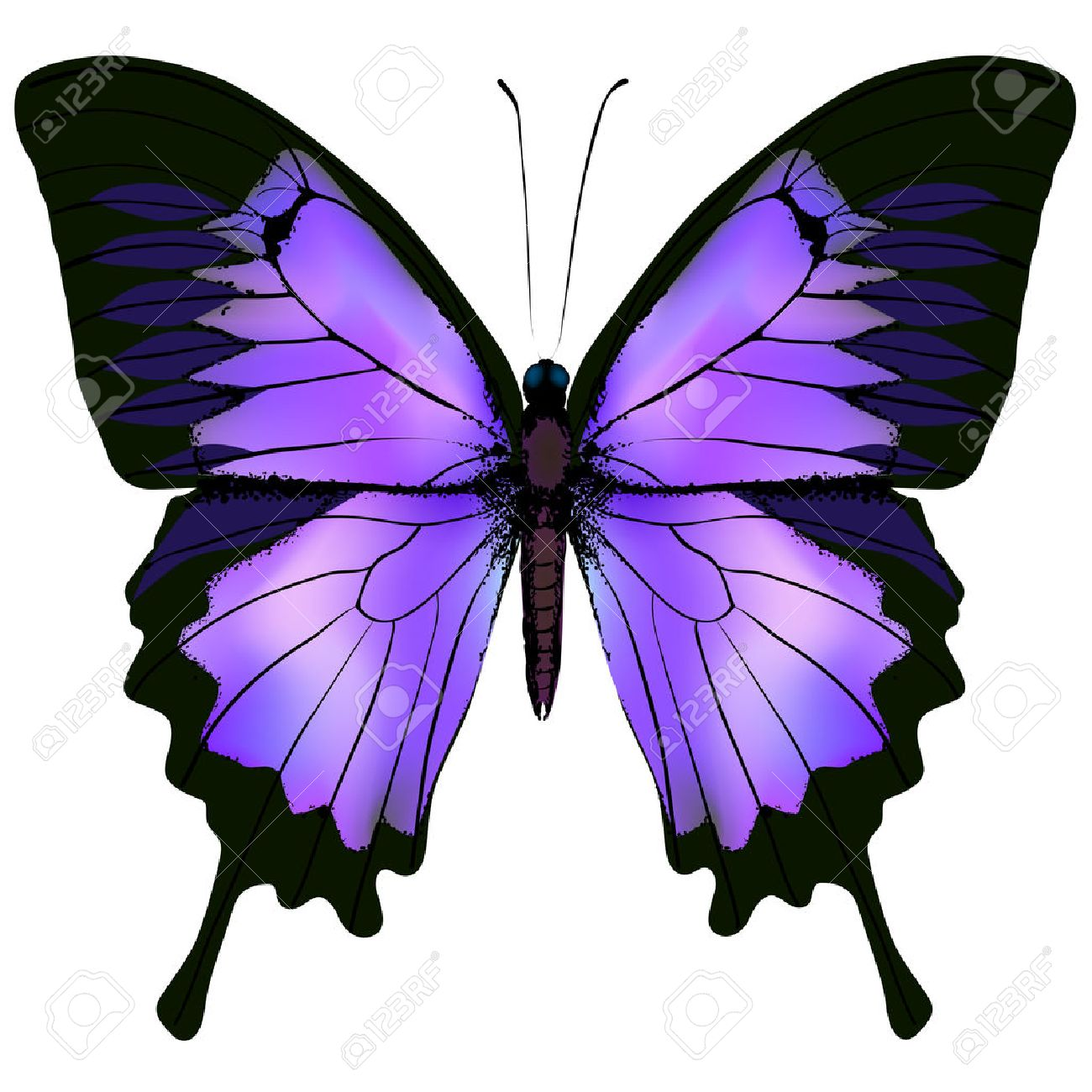 butterfly vector illustration of beautiful pink and purple lilac