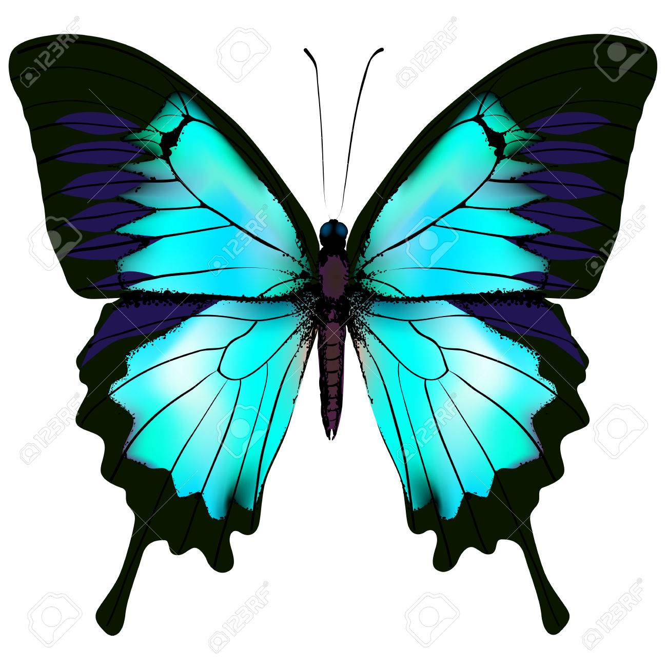 butterfly vector illustration of blue azure white colorful rh 123rf com White Vector Vector Black