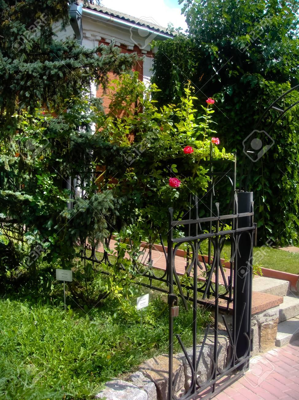 Terrasse In Bluhende Grunpflanzen Lizenzfreie Fotos Bilder Und