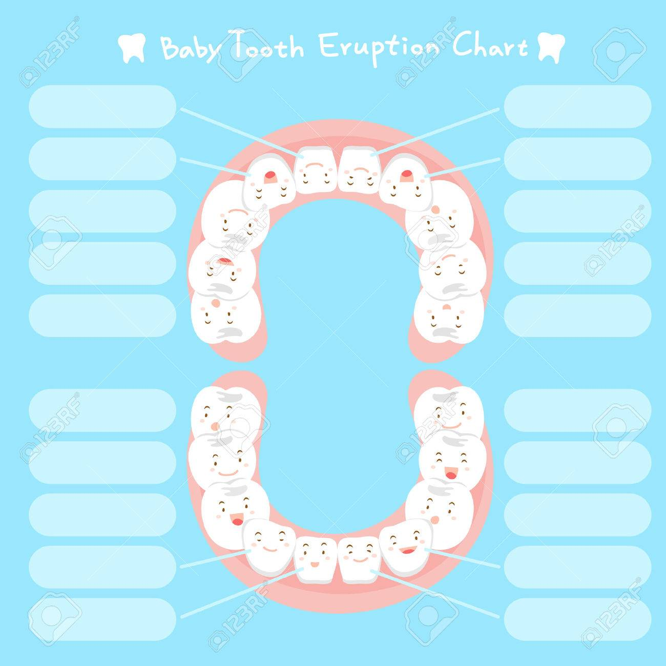cute cartoon healthy baby tooth eruption chart stock vector 71488602