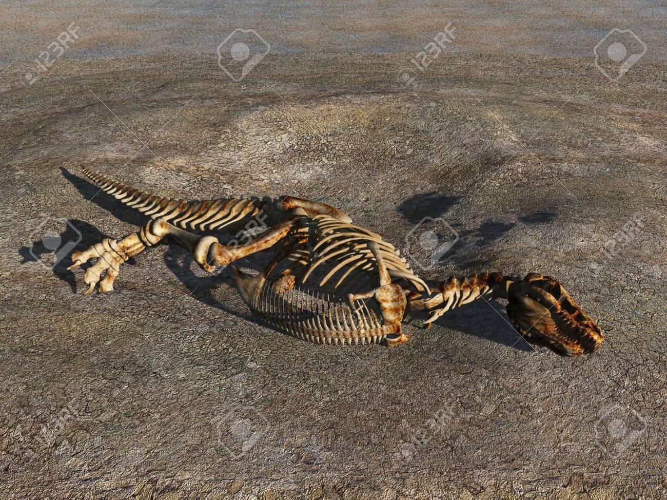 3d Ilustración De Un Esqueleto De Dinosaurio Fotos, Retratos ...
