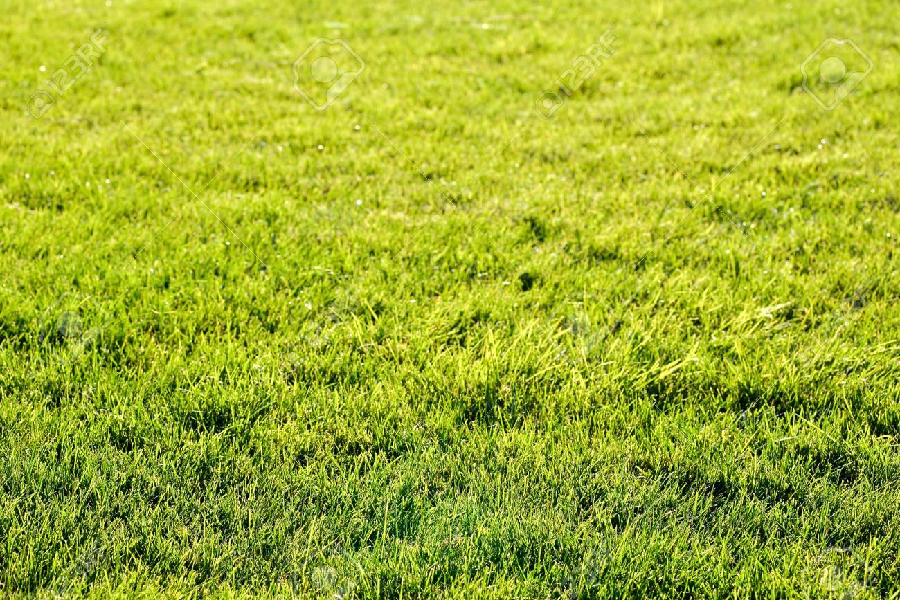 Immagini Stock Trama Di Sfondo Verde Erba Bellissimo Campo Verde