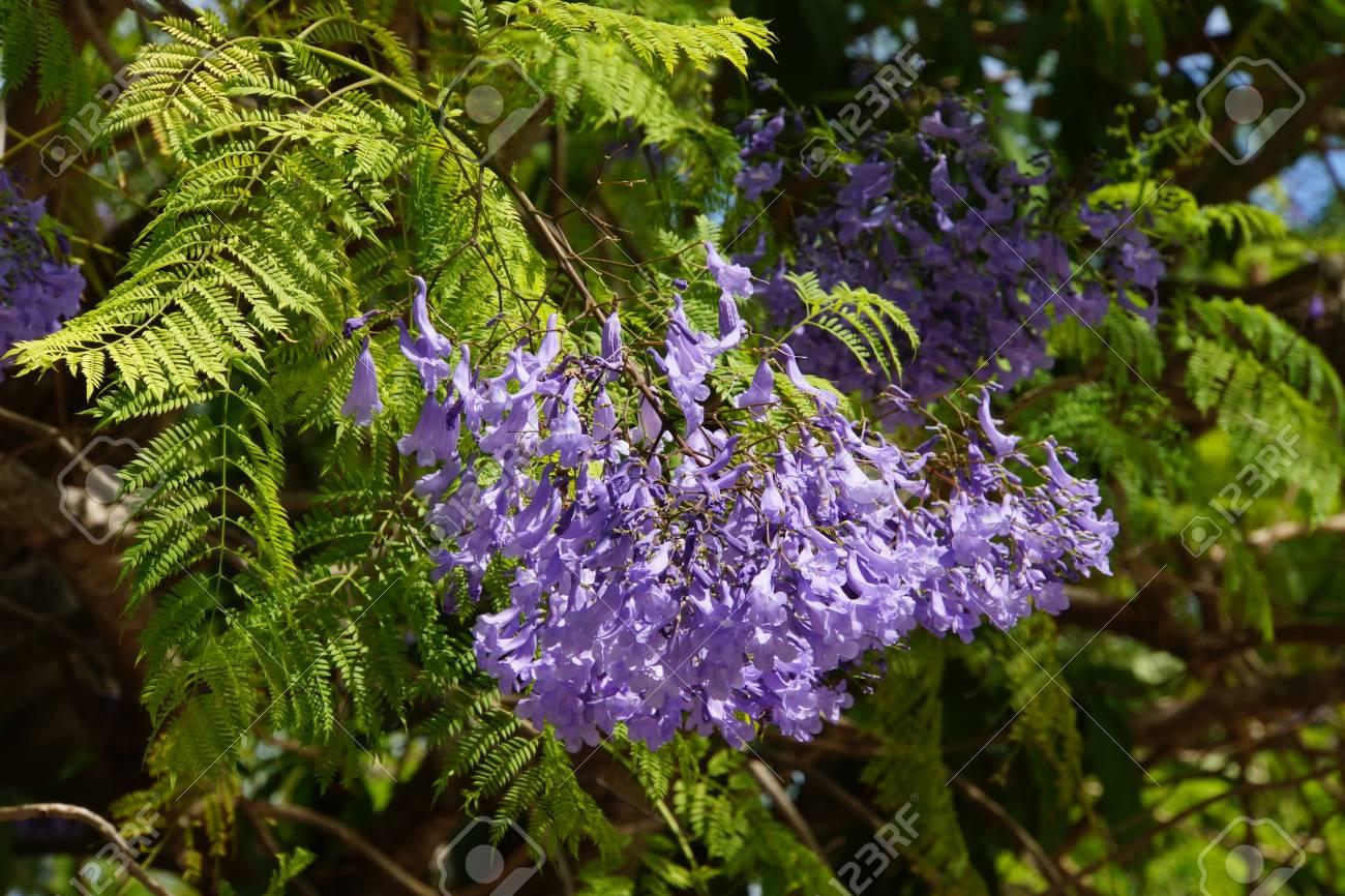 Palisanderholzbaum sdatec.com