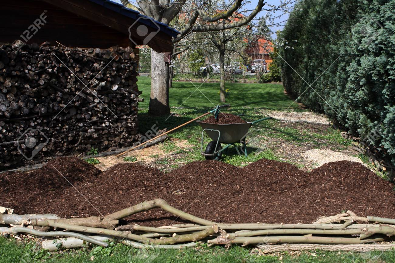Laying A Big Tree Pit Under A Walnut Tree With Bark Stock Photo