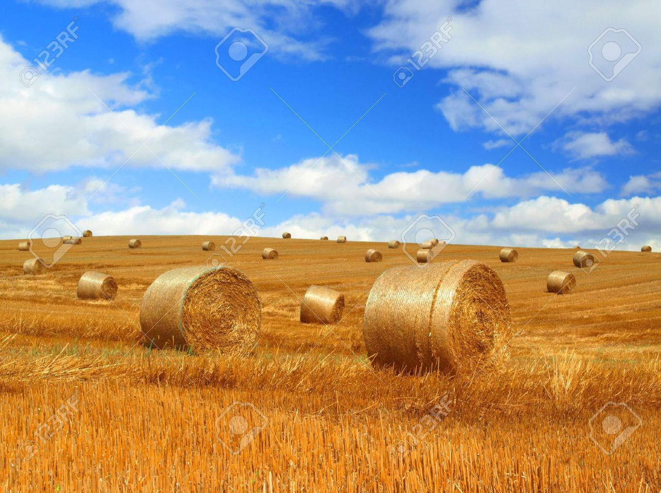 Harvested field with straw bales Stock Photo - 13342855