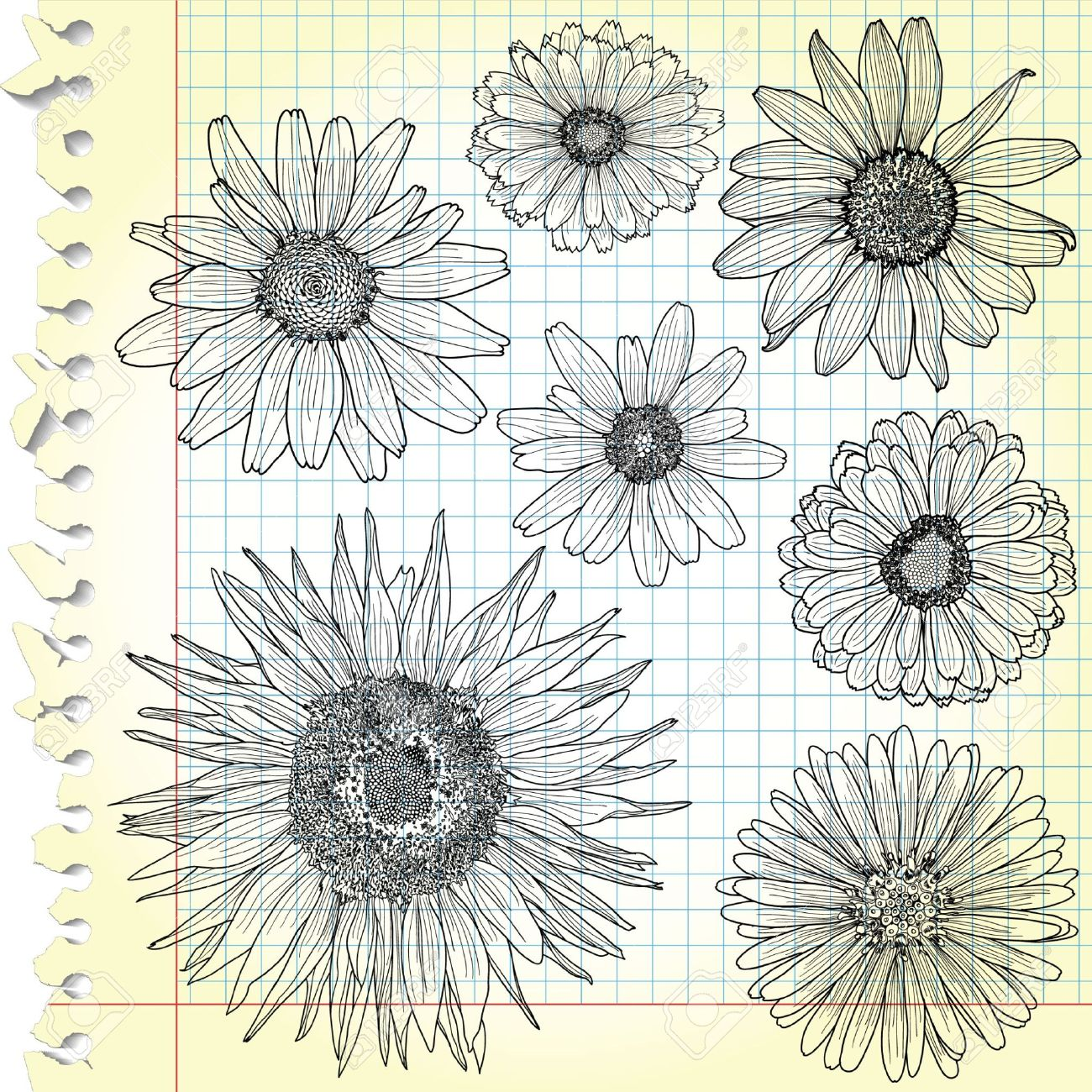 Sketches of blooms on squared paper Stock Vector - 13598947