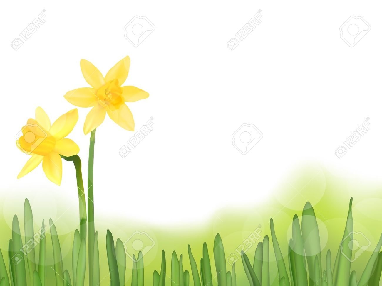 Field Of Daffodils Clipart - Floral delivery