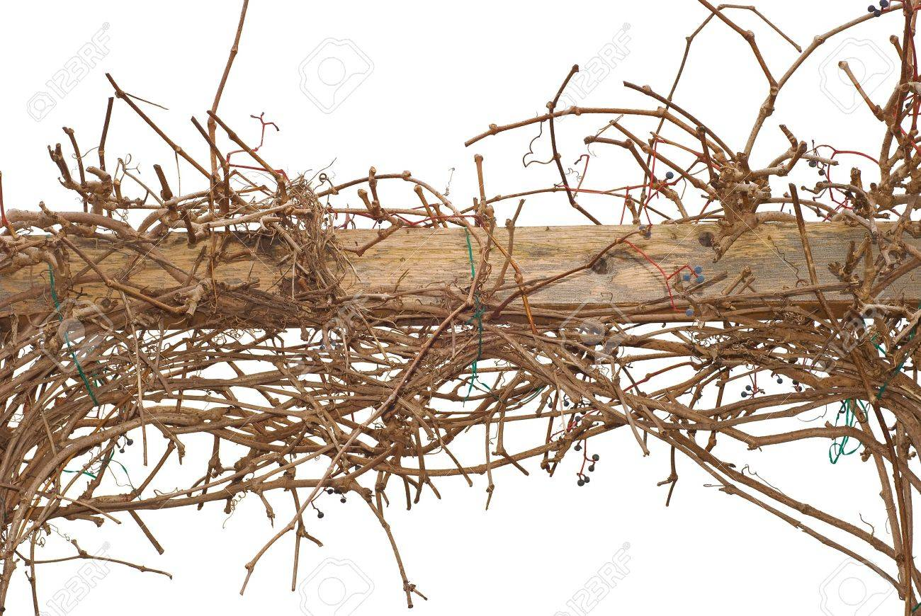 Autumn Climbing Vines On A Wooden Fence Stock Photo Picture And