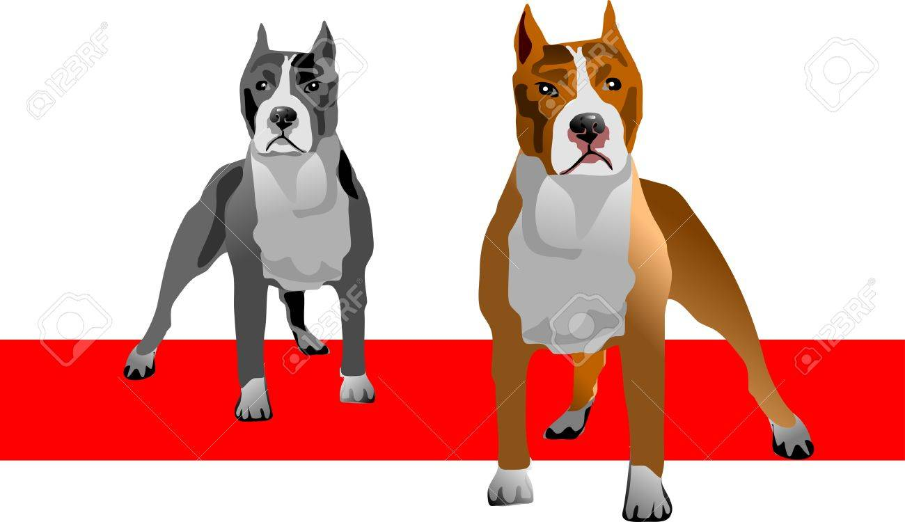 illustration of an American Pit bull Terrier in color and  gray Stock Vector - 12496887