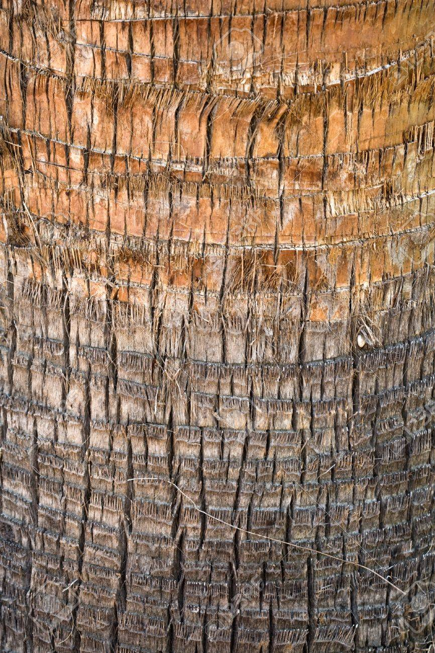 Palm tree cortex detailed closeup texture Stock Photo - 15840925