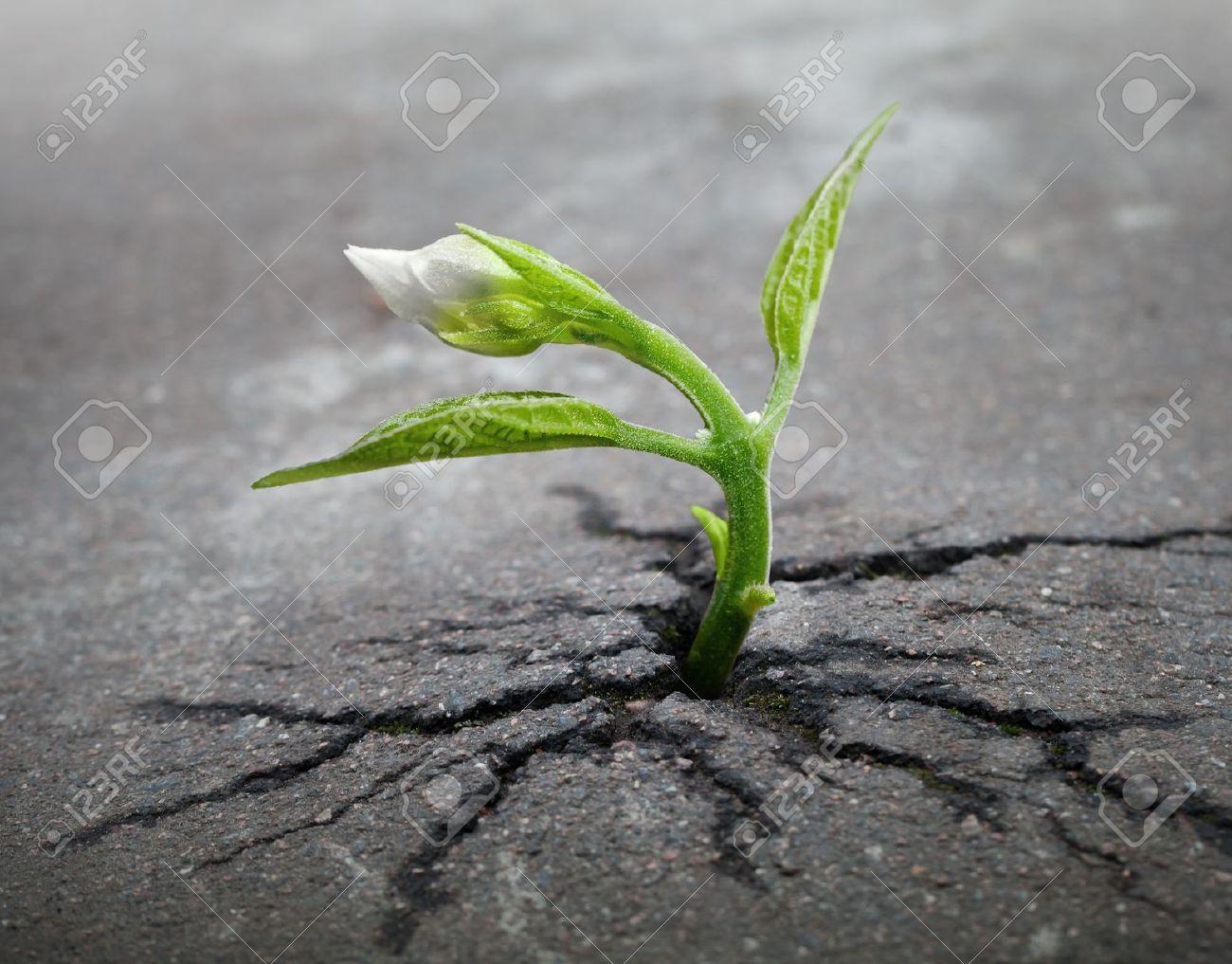 Little flower sprout grows through urban asphalt ground - 17117903