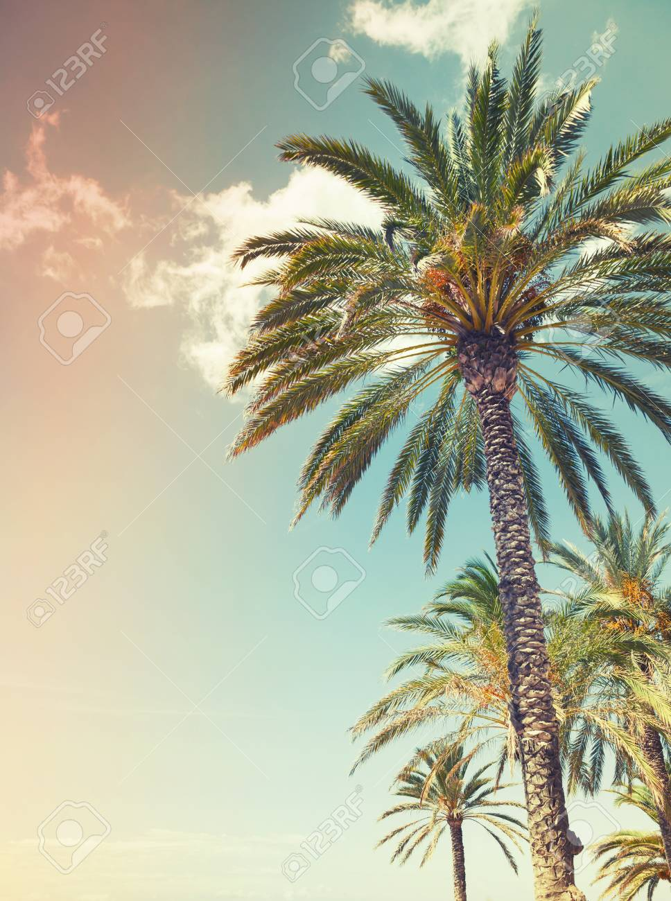 Palm Trees Over Cloudy Sky Background. Vintage Style. Photo With ...