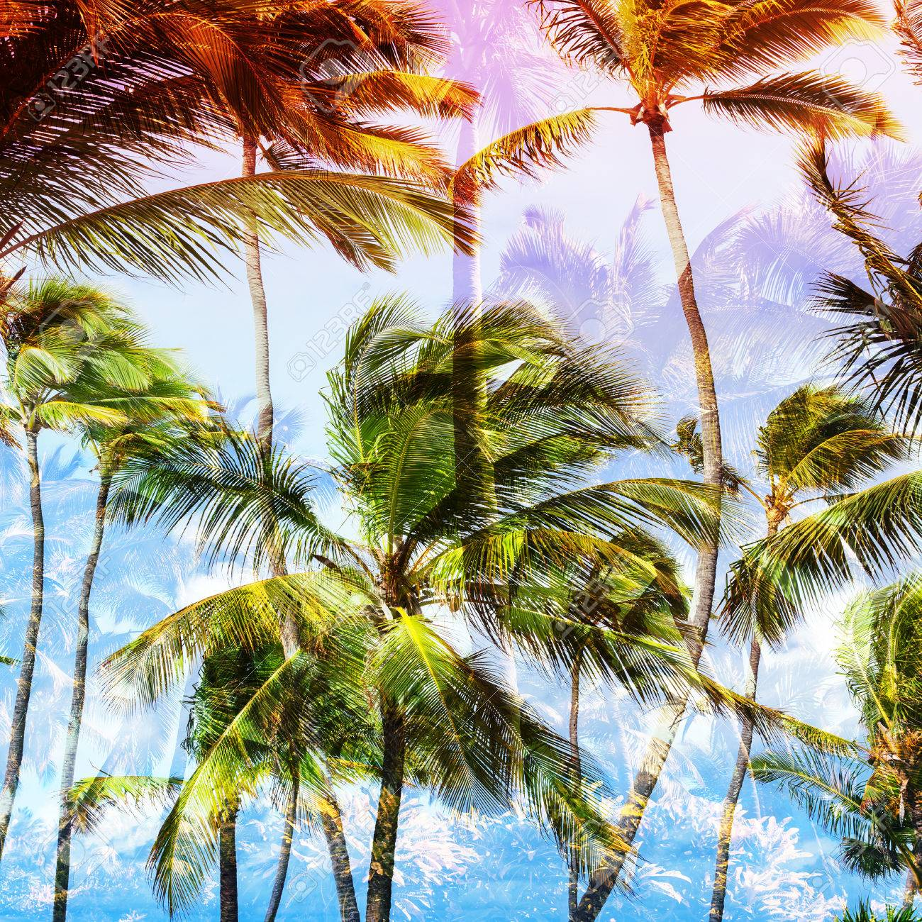 Coconut Palm Trees And Sky, Tropical Vacation Background. Square ...