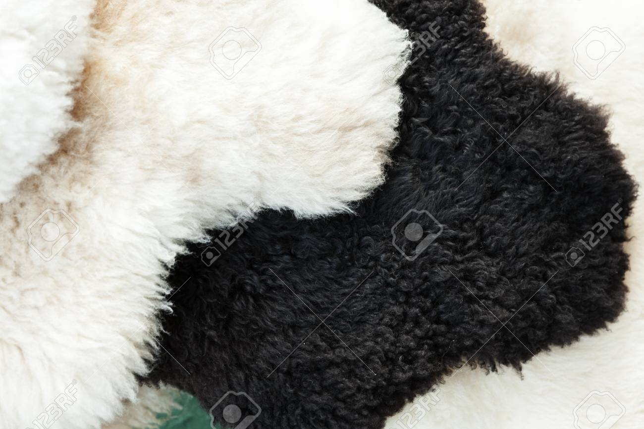 Black And White Sheep Skins Lie On The Counter In The Market Stock on dry sheep equivalent,