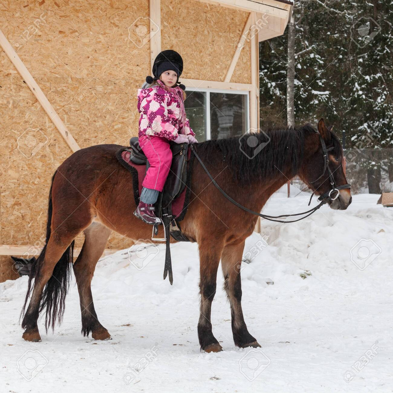 Beginner riding lessons, little girl with brown horse stand on snowy riding field - 120654843